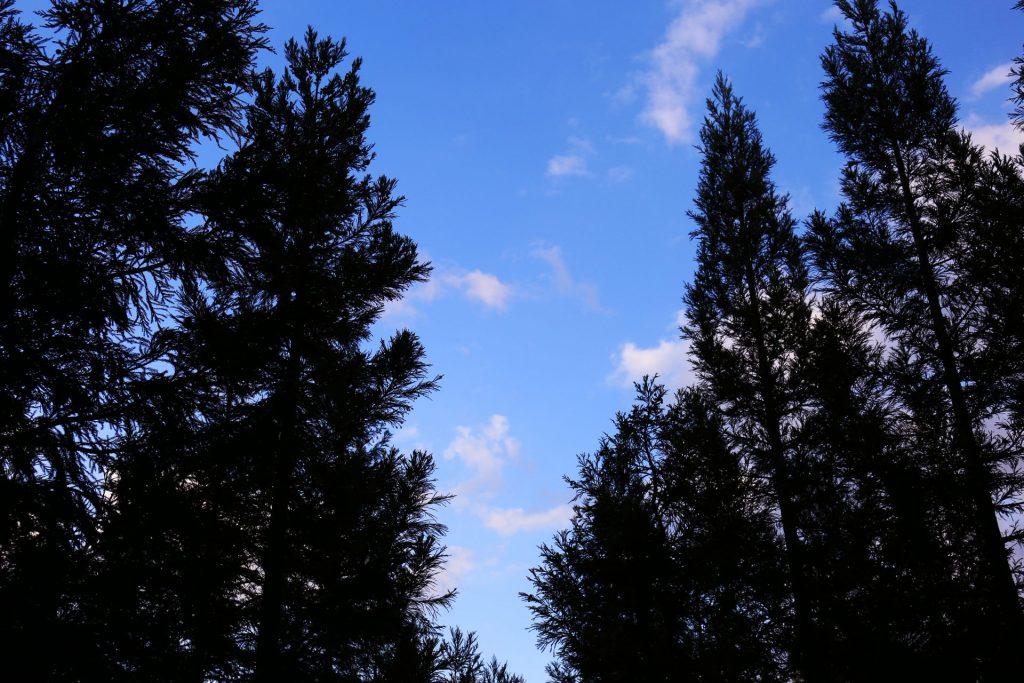 杉の森 新潟