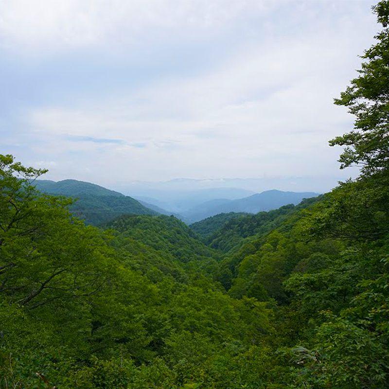 飛騨高山の森