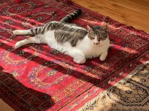 ヴィンテージラグと猫