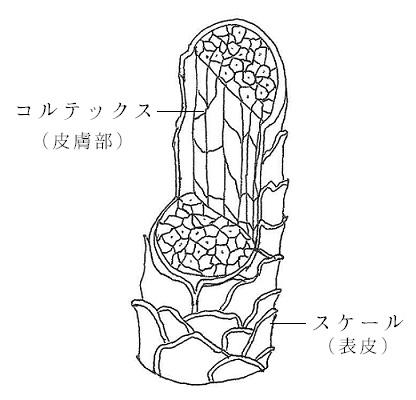 ウールの繊維構造(図)